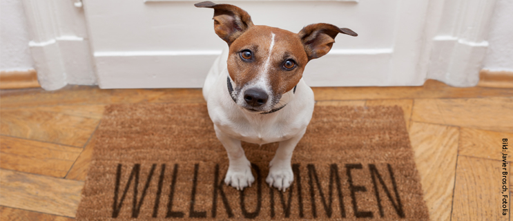 Darlehenszins, Bausparen, Hund