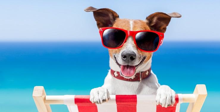 Urlaub mit Hund - Reisecheckliste