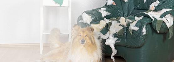 Angebote zur Tierhalterhaftpflicht