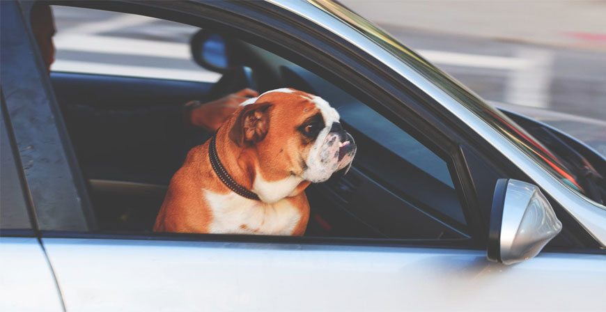 Transportmöglichkeit für Haustiere: Experten empfehlen eine Box