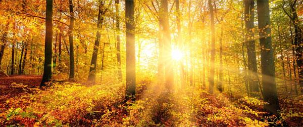Reise-Themenspecial: Goldener Herbst